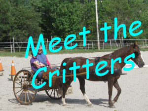 Link-Meet the Critters