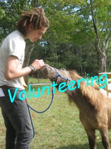 Link-Volunteering