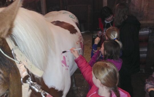 Can You Paint A Horse?